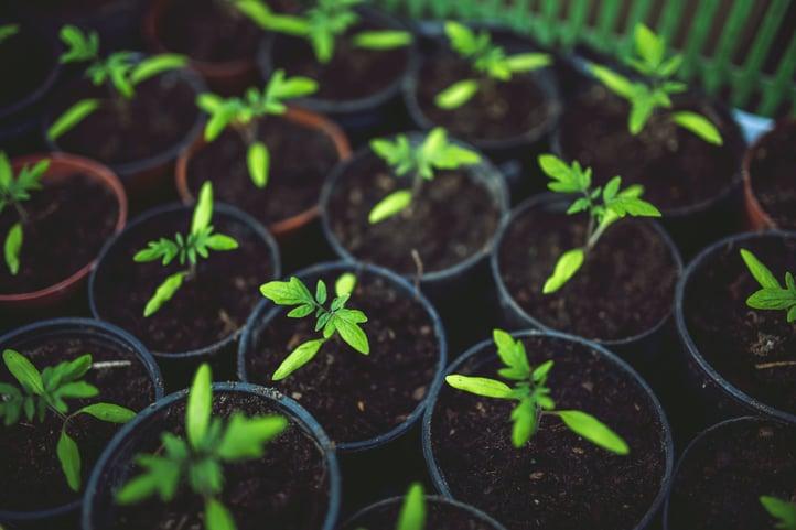 residential landscaping tips for 2018.jpg