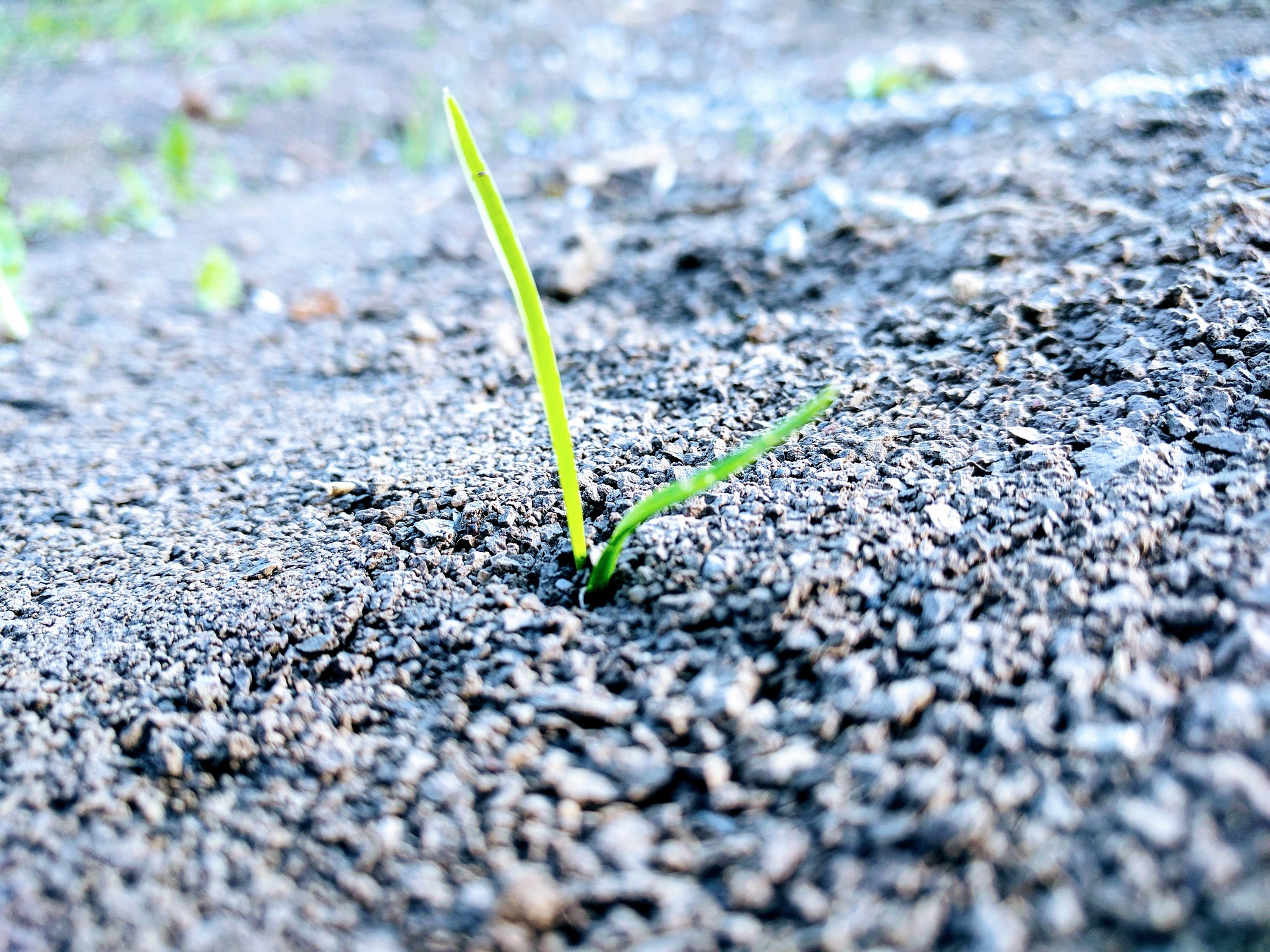 spring lawn seeding.jpg