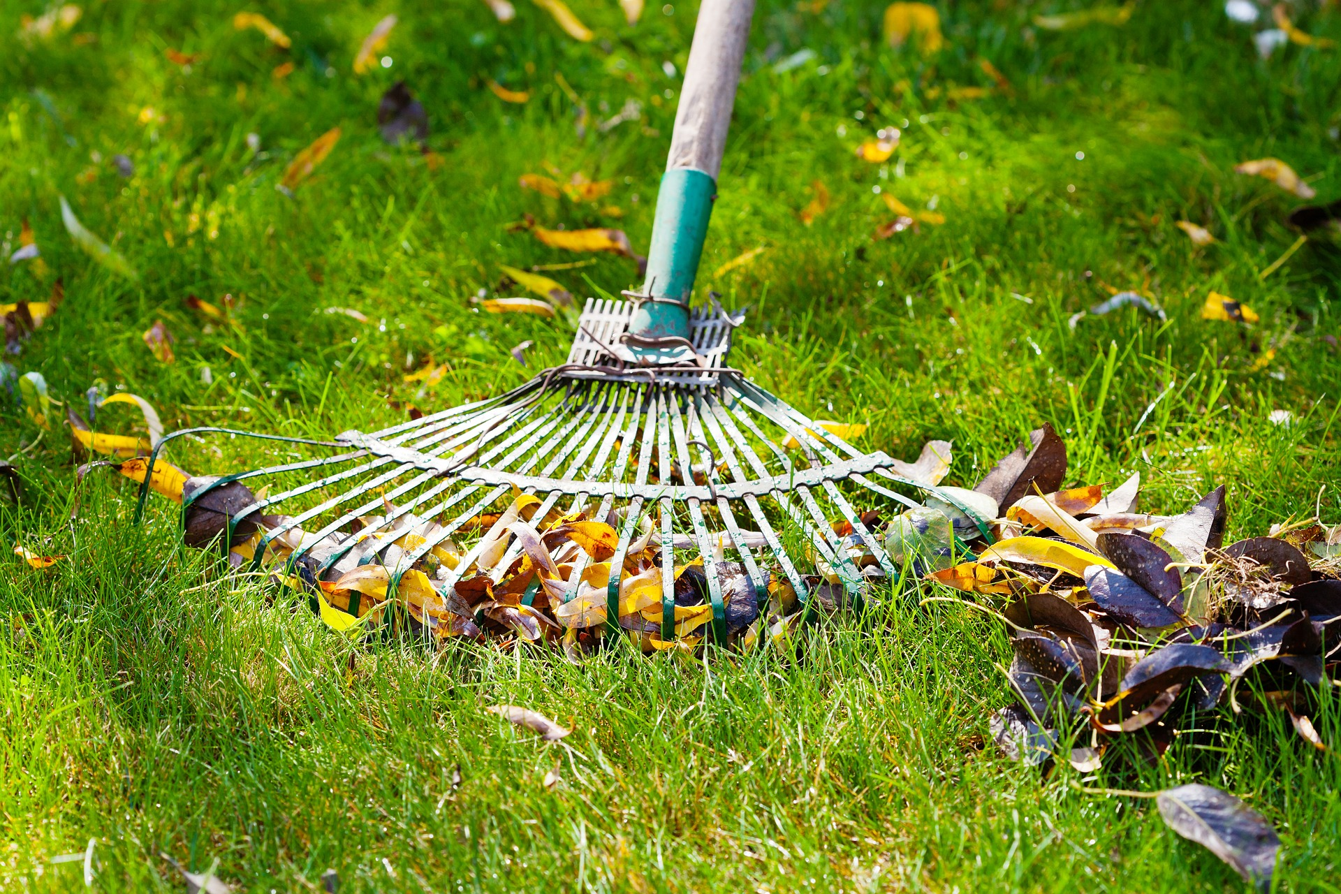spring lawn care guide.jpg