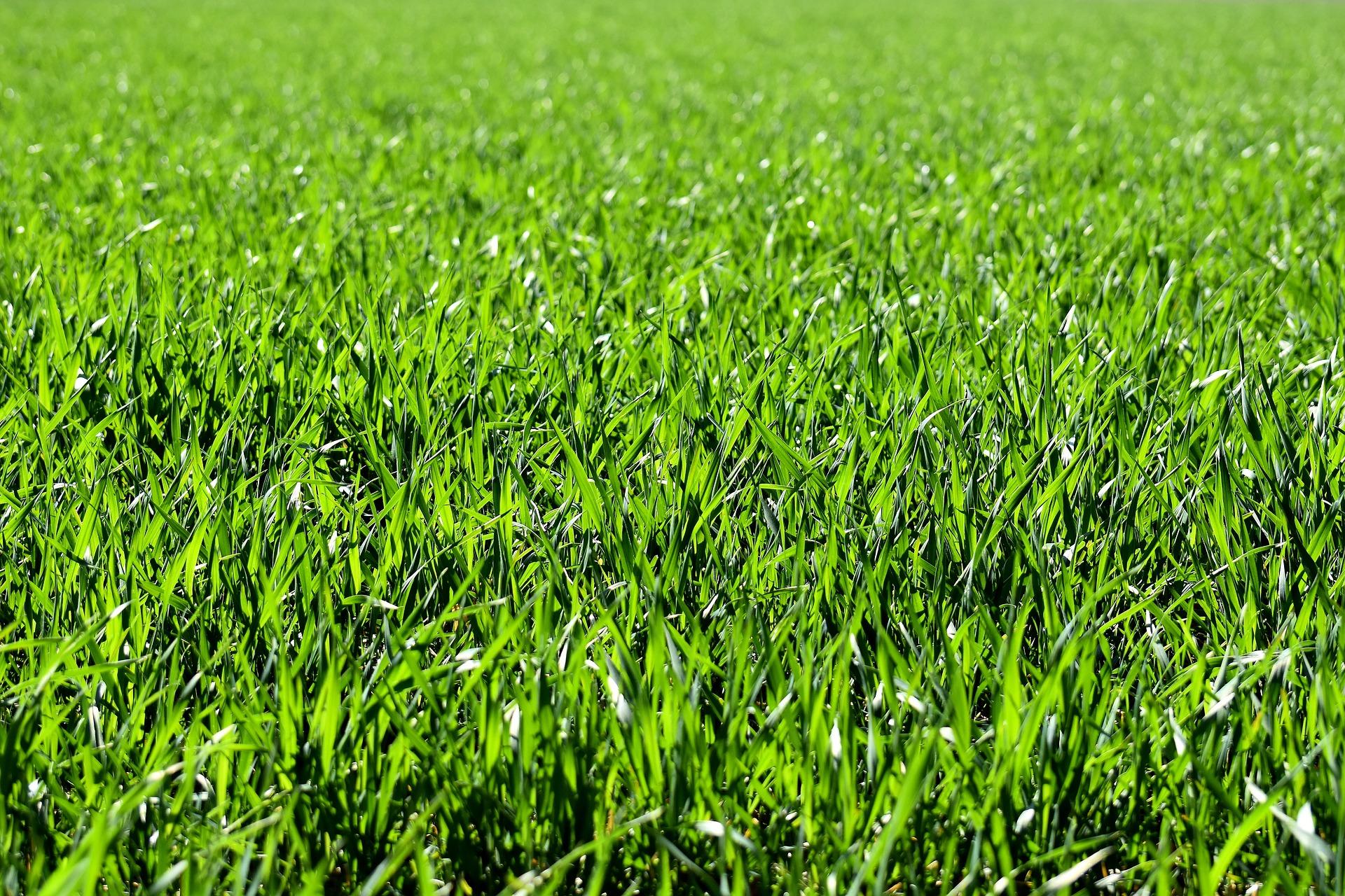 lawn care in spring.jpg