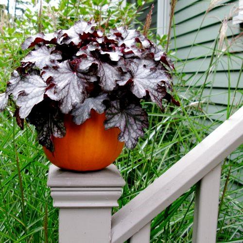 pumpkin planters.jpg