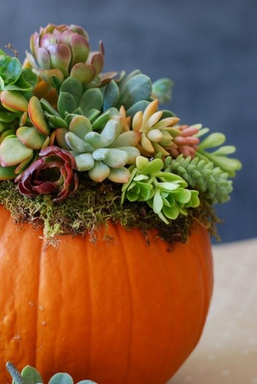 succulent pumpkin.jpg