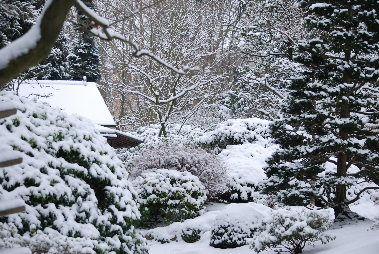 winter lawn care.jpg